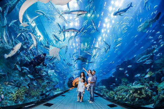 Indoor/underwater zoo